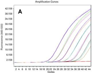 Amplification curve of a commercially available pre-validated hydrolysis probe assay