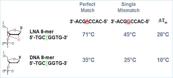 Comparison of mismatch conditions for LNA and DNA