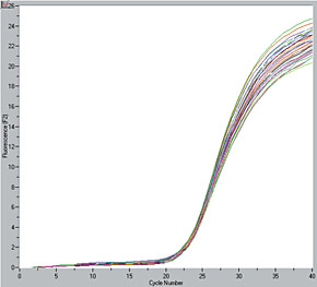 MagNA Pure LC 2.0 Instrument, thirty-two DNA isolations were analyzed by amplification of the Cyclophilin A gene on the LightCycler Instrument using HybProbe probes. The analysis clearly shows congruent curves for all amplifications.