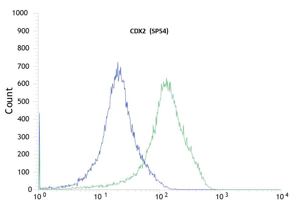 Flow cytometric analysis of rabbit anti-CDX2 (SP54) antibody in HT29 (green) compare to negative control of rabbit IgG (blue)