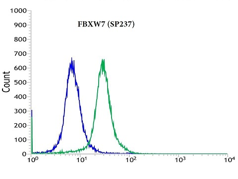 Flow cytometric analysis of rabbit anti-FBXW7 (SP237) antibody in HL-60 (green) compare to negative control of rabbit IgG (blue)