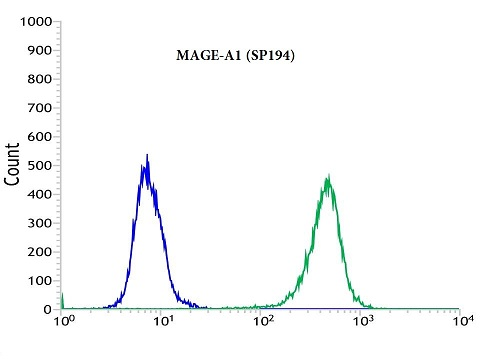 Flow cytometric analysis of rabbit anti-MAGE-A1 (SP194) antibody in A431 (green) compare to negative control of rabbit IgG (blue)
