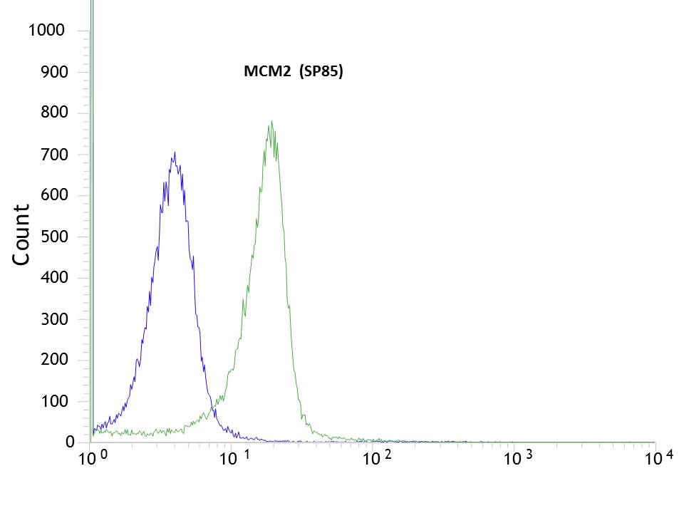 Flow cytometric analysis of rabbit anti-MCM2 (SP85) antibody in HeLa (green) compare to negative control of rabbit IgG (blue)