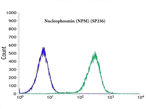 Flow cytometric analysis of rabbit anti-Nucleophosmin (NPM) (SP236) antibody in Jurkat (green) compare to negative control of rabbit IgG (blue)